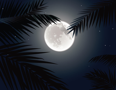 tree disc: The full moon in the sky through the branches of Palm trees