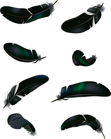 swooping: Vector illustration of birds feathers on isolated background Illustration