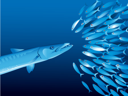 barracuda: Vector illustration of shoal of fishes in water depth