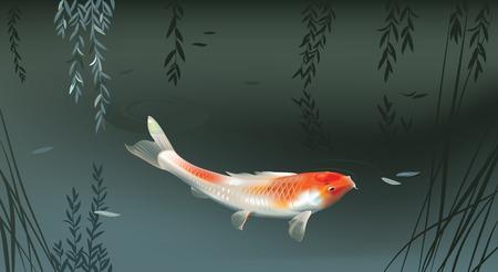 pez carpa: Ilustración vectorial de la carpa koi en la charca noche