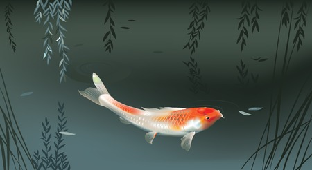 Vector illustration of koi carp in evening pond Çizim