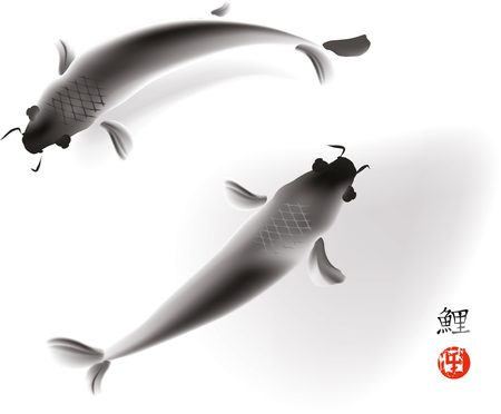coi carp: Artistic vector illustration of koi carps couple in water