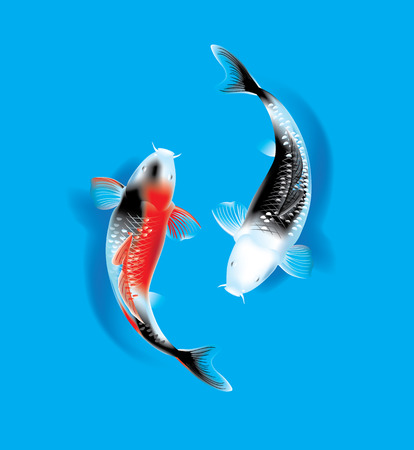 Vector illustration of traditional sacred Japanese Koi carp fish Çizim