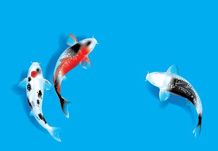 Ilustración del vector del tradicional sagrado japonés Koi peces carpa