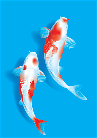 decorative fish: Vector illustration of traditional sacred Japanese Koi carp fish Illustration