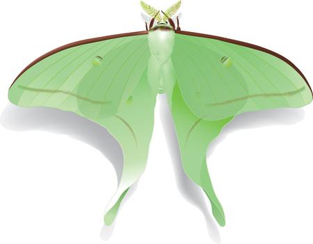illustration of beautiful butterfly Artemis isolated on white Ilustracja