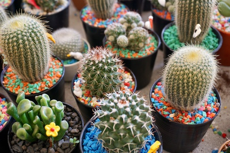 Close up view of potted cactus