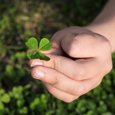 clover quatrefoil in hand close-up photo