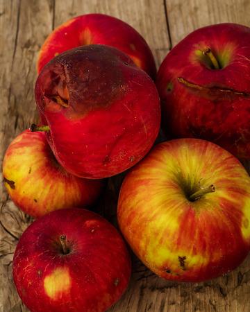 putrefy: autumn red apples closeup of a little rotten