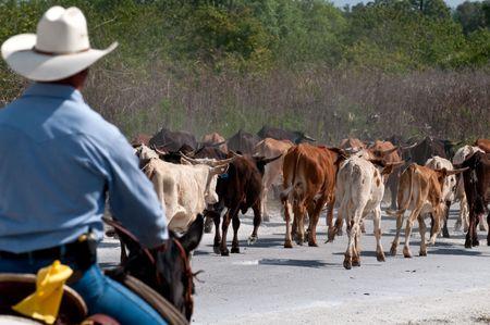 Cowboy runderen op een landbouw bedrijf, gebruik van selectieve focus rijden.