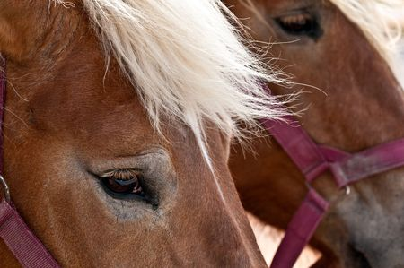 Close up of horse head with detail in the eye, use of selective focus. Stock Photo - 4596022