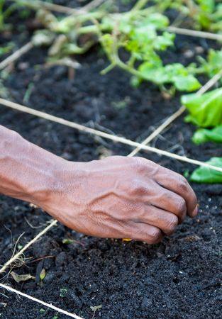 Close up of hands working in a garden puting seeds in soil. photo
