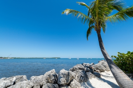 Tropical beach and palm tree in the Florida Keys, this is a very popular tourist attraction  photo