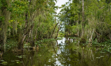 forest conservation: The Everglades are subtropical wetlands located in the southern portion of the U.S. state of Florida. This is a National Park and a very popular travel destination.