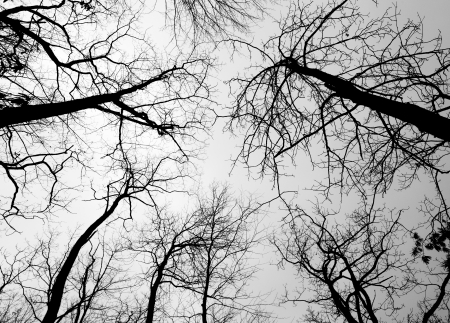 black and white forest: Pattern of tree branches during winter Stock Photo