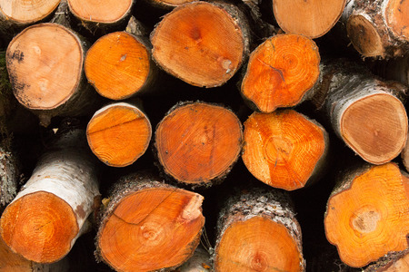 lumbering: background texture of round circular birch sawn logs, stacked in a pile Stock Photo