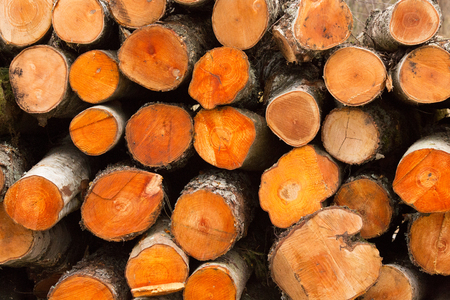 background texture of round circular birch sawn logs, stacked in a pile Stock Photo