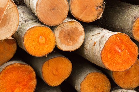 flaw: background texture of round circular birch sawn logs, stacked in a pile Stock Photo