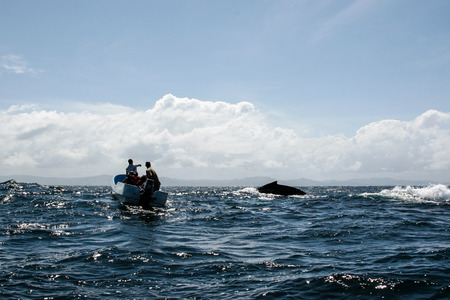 humpback whale: Tail of humpback whale and tourist boat in Samana, Dominican republic