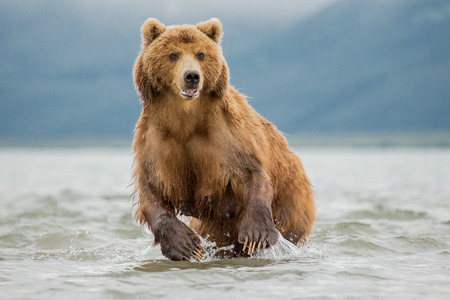 She-bear hunting and fishing in Kamchatka, Russia