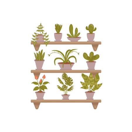Illustrations set of home decorative plants on shelfs. Flower in pot. Vector pictures set use for landing page, web, banner, poster, flyer, card Ilustracja