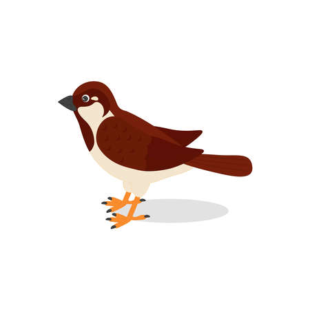Cute sparrow, isolated on white background. Bird icon. Vector illustration 向量圖像
