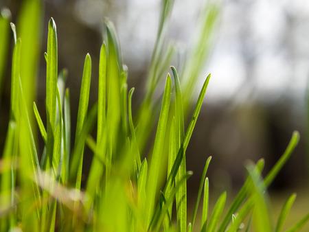 macro spring green nature grass