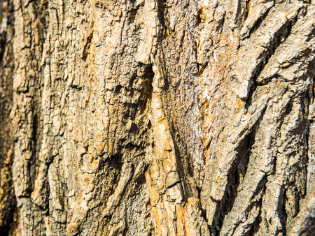 bark of a tree texture background 스톡 콘텐츠