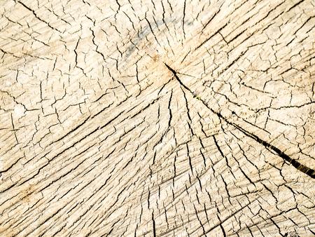 old wood texture of tree stump 스톡 콘텐츠
