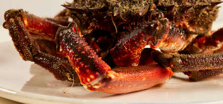 Spider crab from the estuaries of Galicia. This region is one of the world's leading seafood producers