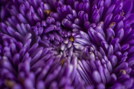 close up: Purple flower close up