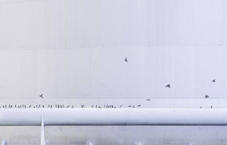 School of birds sitting on pipeline with white storage tank background at oil and gas tank field. 版權商用圖片