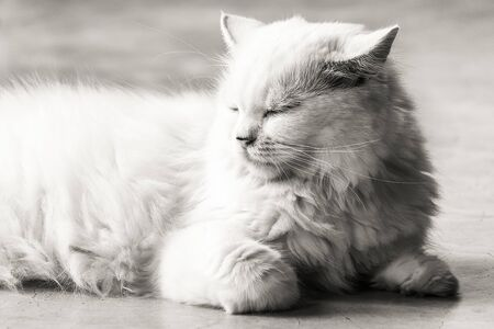 Fluffy cat with sleepy eye in black and white.