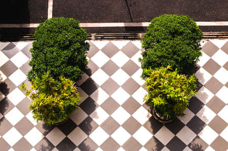 Top view of tropical outdoor decorated plant on the tiled pavement. Banque d'images