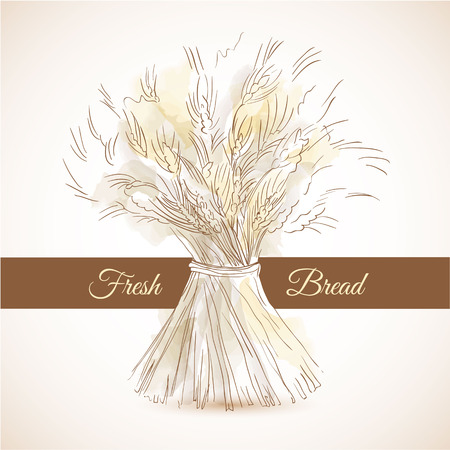 sheaf: Hand drawn sketch sheaf of wheat. Doodle concept for fresh bread or flour products advertising campaign. Brown ribbon on background for your text Illustration