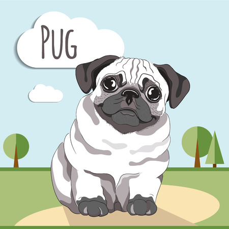 pug: Pug puppy. Pug-dog on white background. Greeting card Illustration