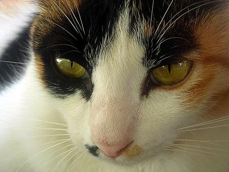 instincts: Cat looking