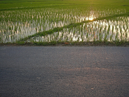 Lush green rice field and road, In Asia photo