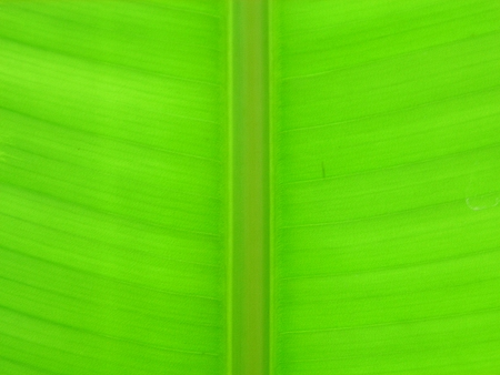 Texture of a green leaf as background photo