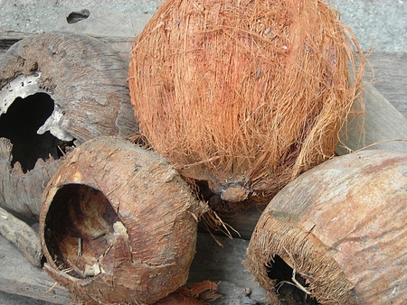 desiccated: Desiccated Coconut