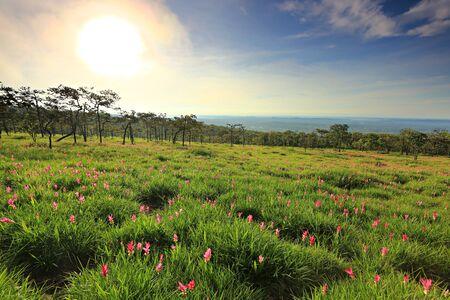 Public attractions Thung Bua Sawan View Point (Thung Dok Krachieo) at Sai Thong National Park Chaiyaphum Thailand