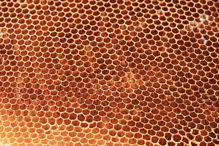 Honeycomb stored dry out for Chinese medicine.