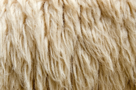Sheepskin Background photo