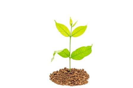 Seedling green plant on a white background Stock Photo - 15638580