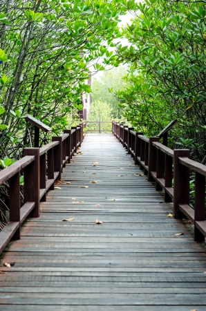 A wooden bridge on mangrove forest photo