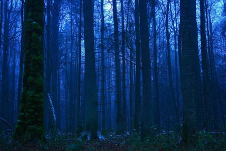 Forest at dusk photo