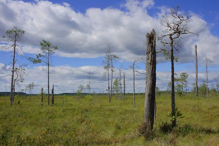 Swampy peatland in Patvinsuo National Park, Karelia - Finland photo