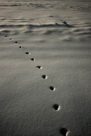 Footprints of Red Fox on a snow Stock Photo - 4055345