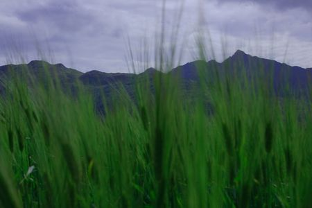 Field of barley with mountains as a background Stock Photo - 4055372