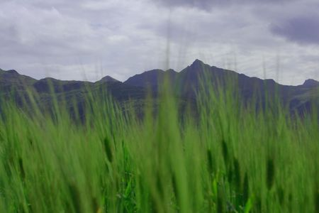 Field of barley wuth mountains as a background Stock Photo - 4055371